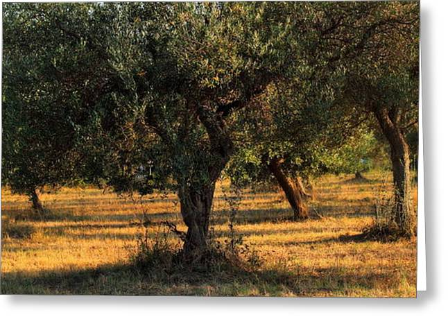 Olive Grove 3 Greeting Card