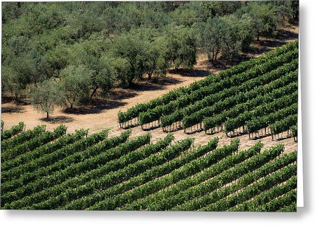 Olive Grove Meets Vineyard Greeting Card