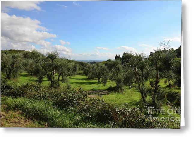 Olive Groves In Tuscany Italy Greeting Card by DejaVu Designs