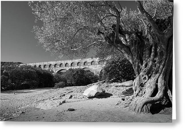 Greeting Card featuring the photograph Olive Tree And Pont Du Gard, France by Richard Goodrich