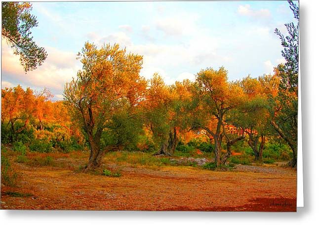 Marko Mitic Greeting Cards - Olive Tree Forest Greeting Card by Marko Mitic