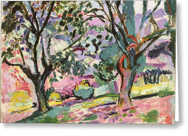 Olive Trees At Collioure Greeting Card