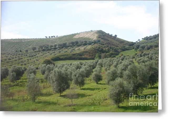 Olive Trees Greeting Card by Dennis Curry