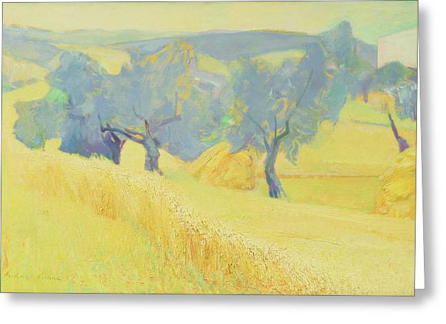 Olive Trees In Tuscany Greeting Card by Antonio Ciccone