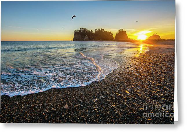 Olympic Peninsula Sunset Greeting Card