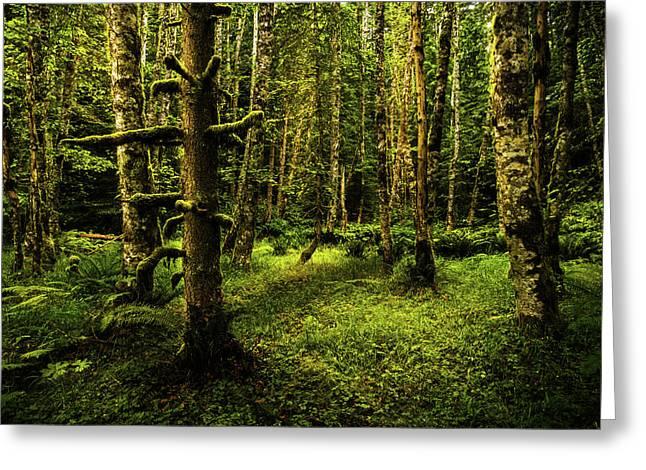 Olympic Rainforest, Washington Greeting Card by TL Mair