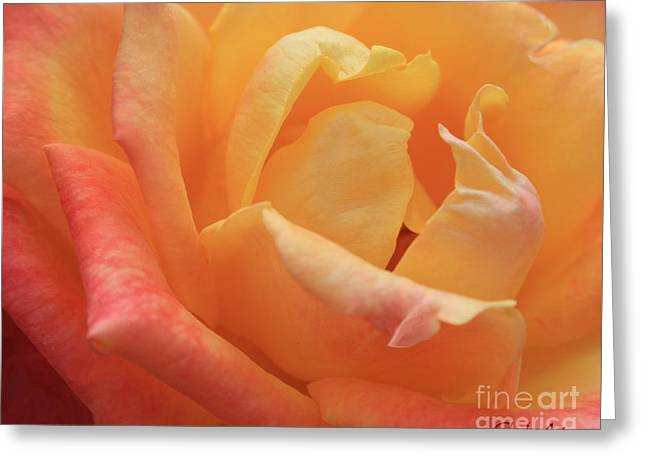 Ombre Rose Greeting Card
