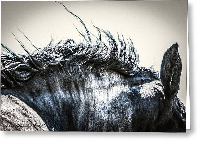 #1240 - Mortana Morgan Mare Greeting Card