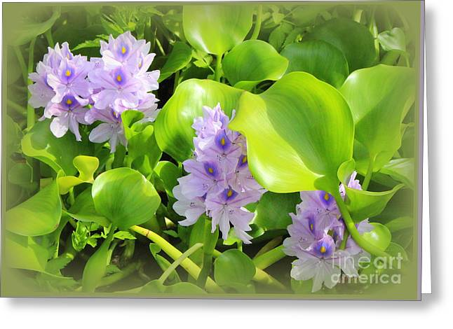 Tropical Water Lilies In Full Bloom Greeting Card