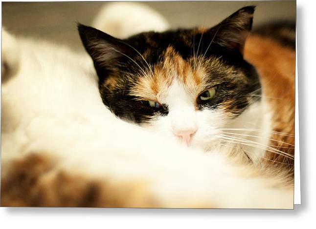 Greeting Card featuring the photograph On A Furry Pillow by Laura Melis