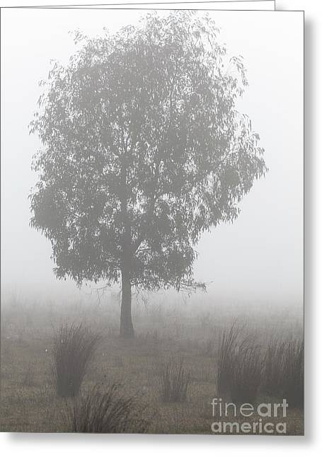 Greeting Card featuring the photograph On A Winter's Morning by Linda Lees