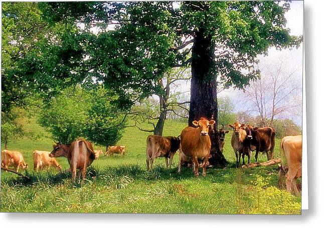On Emerald Pastures Greeting Card by Jan Amiss Photography