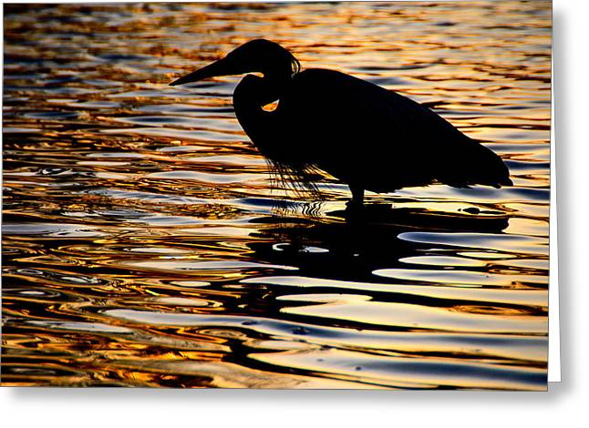 On Golden Pond Greeting Card by Neil Shapiro