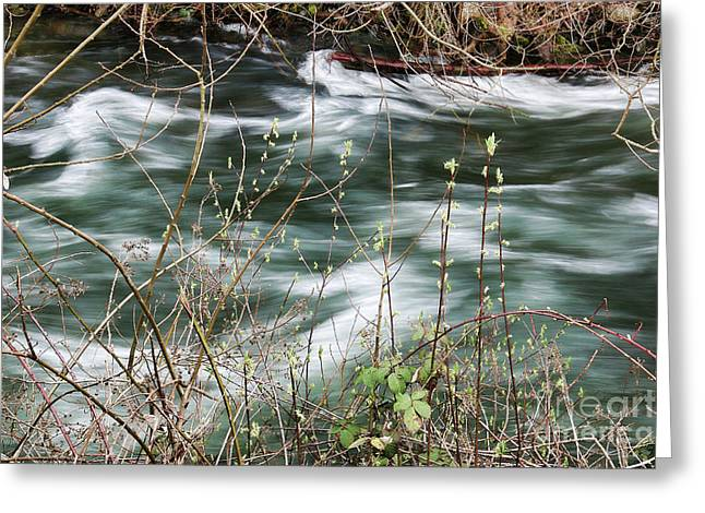 On The Bank Of Whatcom Creek Greeting Card by Cheryl Rose