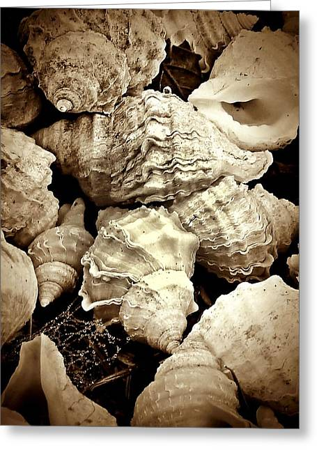 On The Beach - Shells In Sepia Greeting Card