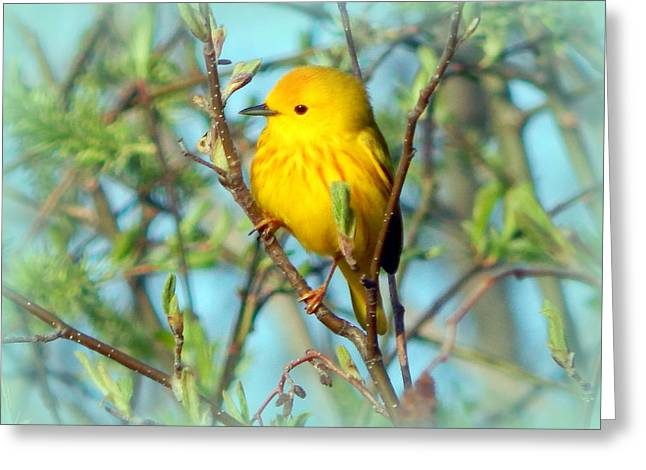 On The Branch Greeting Card