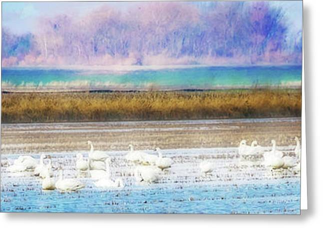 On The Delta Panorama Greeting Card by Terry Davis