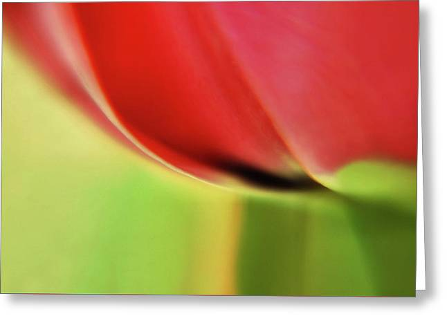 Greeting Card featuring the photograph  Tulip's  Edge by Elaine Manley