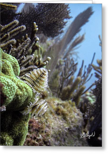 On The Edge Greeting Card by Steve Weigold