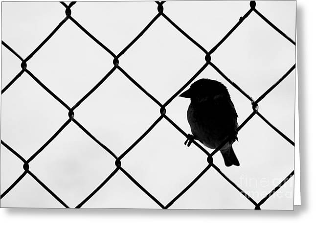 On The Fence Greeting Card by Afrodita Ellerman