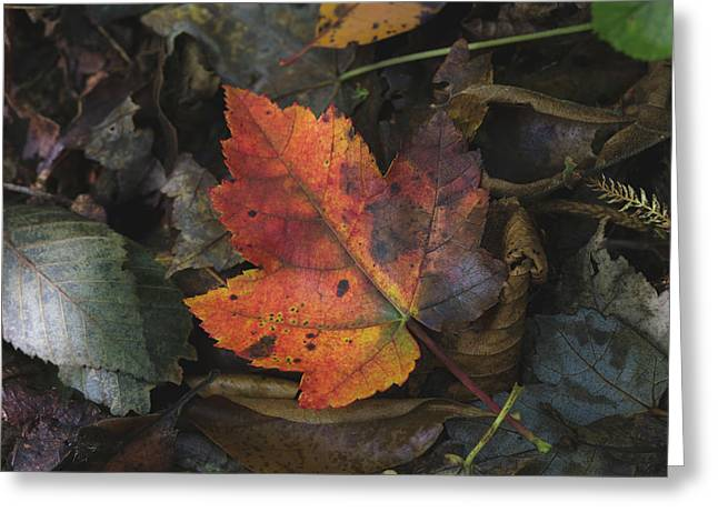On The Forest Floor Greeting Card
