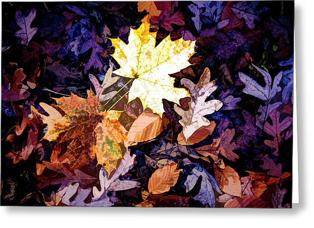 On The Forest Floor Vivid Colors Greeting Card