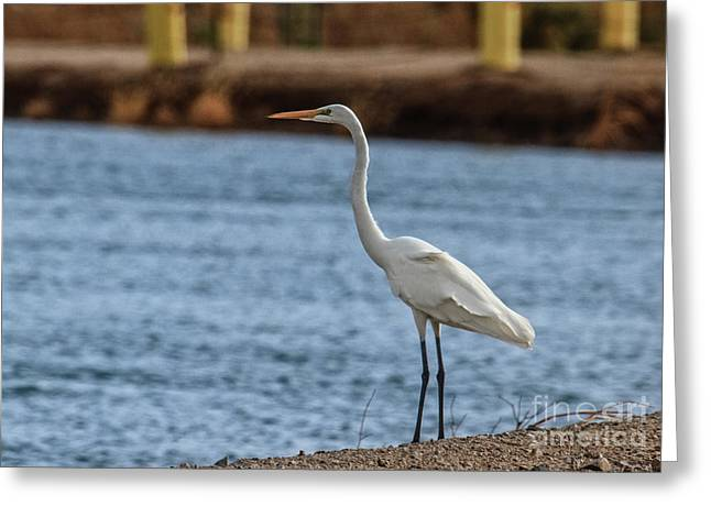 On The Hunt Greeting Card by Robert Bales