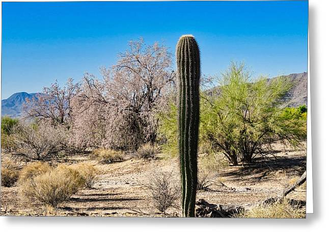 On The Ironwood Trail Greeting Card