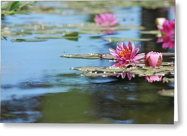 Greeting Card featuring the photograph On The Pond by Amee Cave
