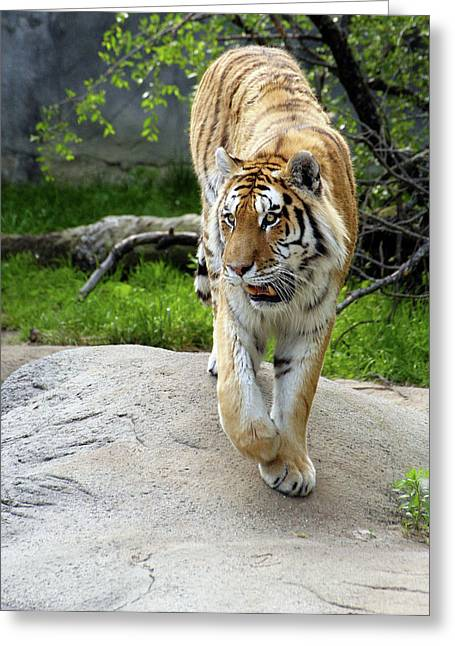 On The Prowl Greeting Card by Gordon Dean II