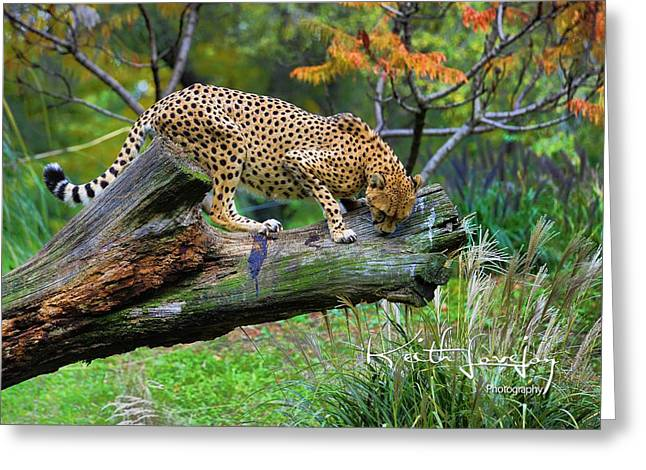 On The Prowl Greeting Card by Keith Lovejoy