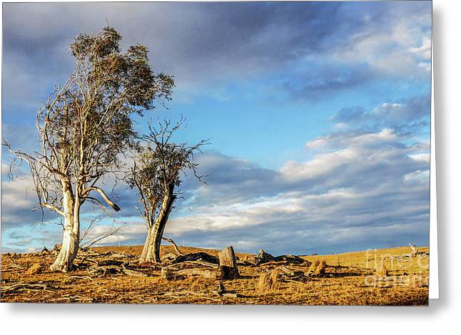 On The Road To Cooma Greeting Card