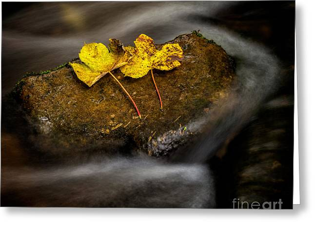 On The Rocks Greeting Card by Adrian Evans