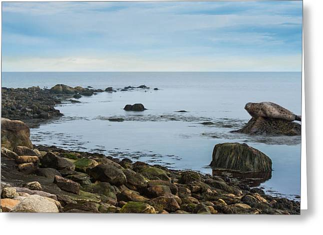 Greeting Card featuring the photograph On The Rocks by Robin-lee Vieira