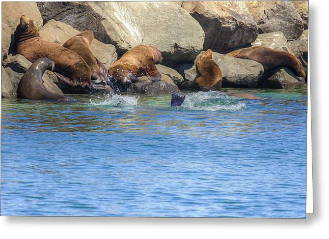 On The Rocks - Sea Lions Greeting Card