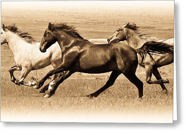 The Horse Greeting Cards - On The Run Greeting Card by Steve McKinzie