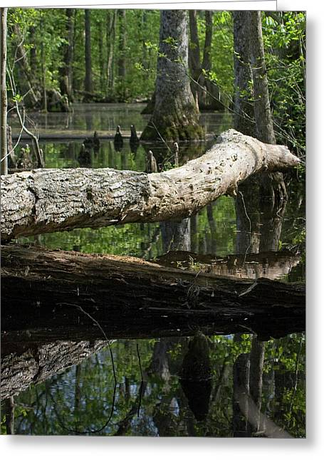 On The Swamp Greeting Card by Alan Raasch