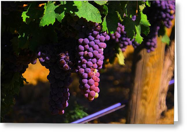 On The Vine Greeting Card by Jeff Swan