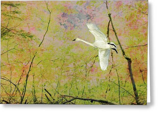 Greeting Card featuring the photograph On The Wing by Belinda Greb