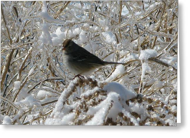 On Thin Ice Greeting Card by Martie DAndrea
