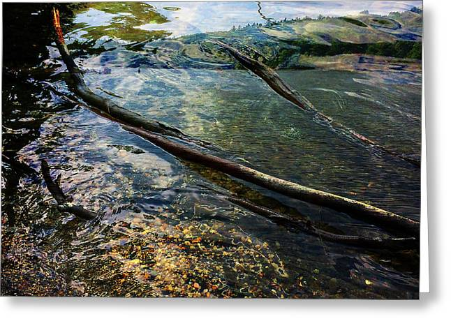 On Walden Pond, Concord, Massachusetts, Spring 2014 Greeting Card