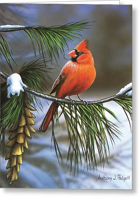 On Watch - Cardinal Greeting Card
