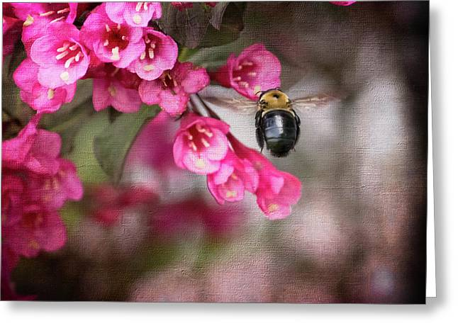 On Wine And Roses Weigela - 2 Greeting Card