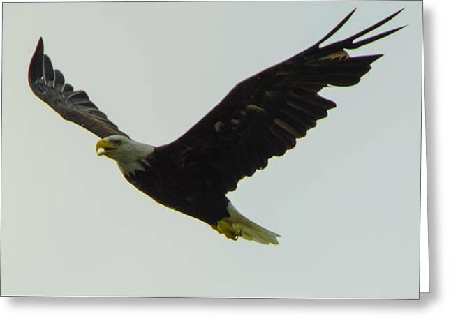 Pond In Park Greeting Cards - On Wings of an Eagle Greeting Card by Jeff at JSJ Photography