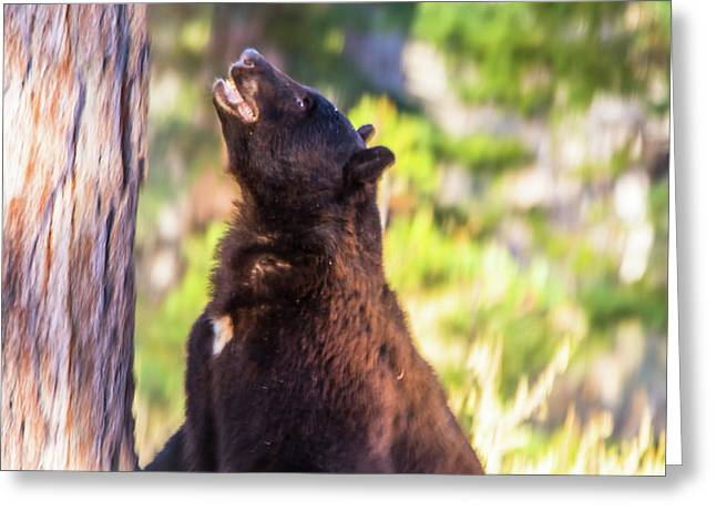 One Angry Black Bear Greeting Card by Marc Crumpler