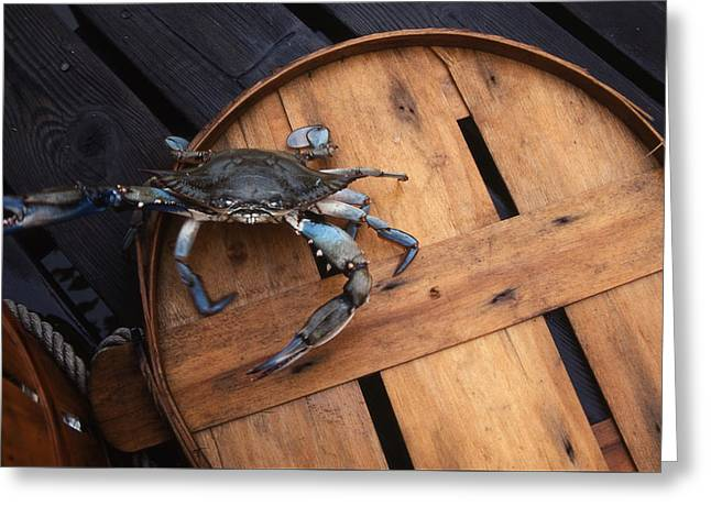 One Angry Crab Greeting Card by Skip Willits