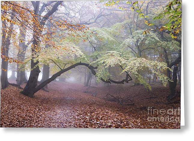 One Autumn Morning  Greeting Card