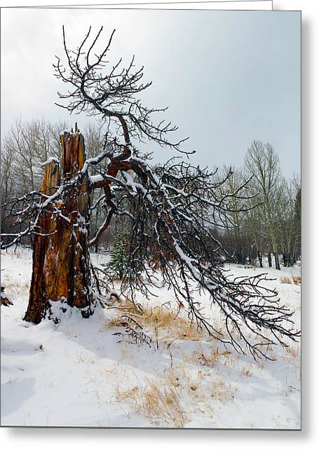 Greeting Card featuring the photograph One Branch Left by Shane Bechler