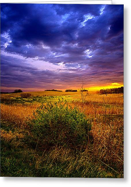 Red Photographs Greeting Cards - One Bush Greeting Card by Phil Koch