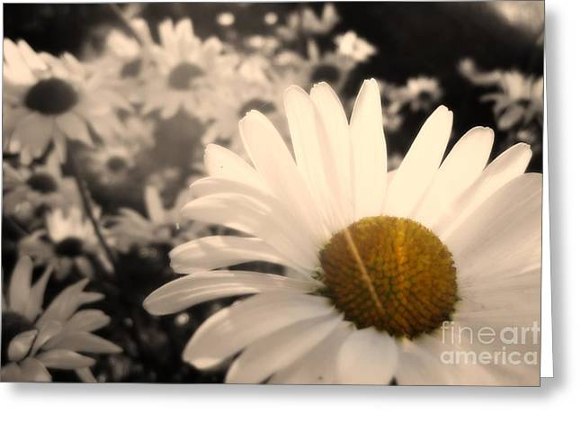 One Daisy Stands Out From The Bunch Greeting Card